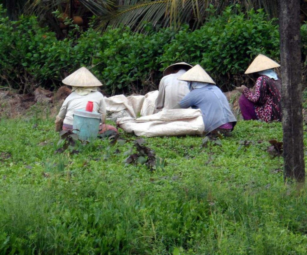Vietnam Cycling Reviews - Field workers