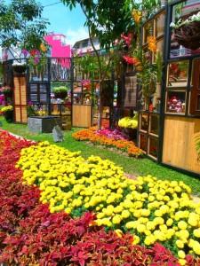 TET-2015-Saigon - Flower Street