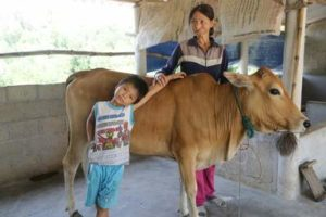 Helping Orphans Worldwide cow programme